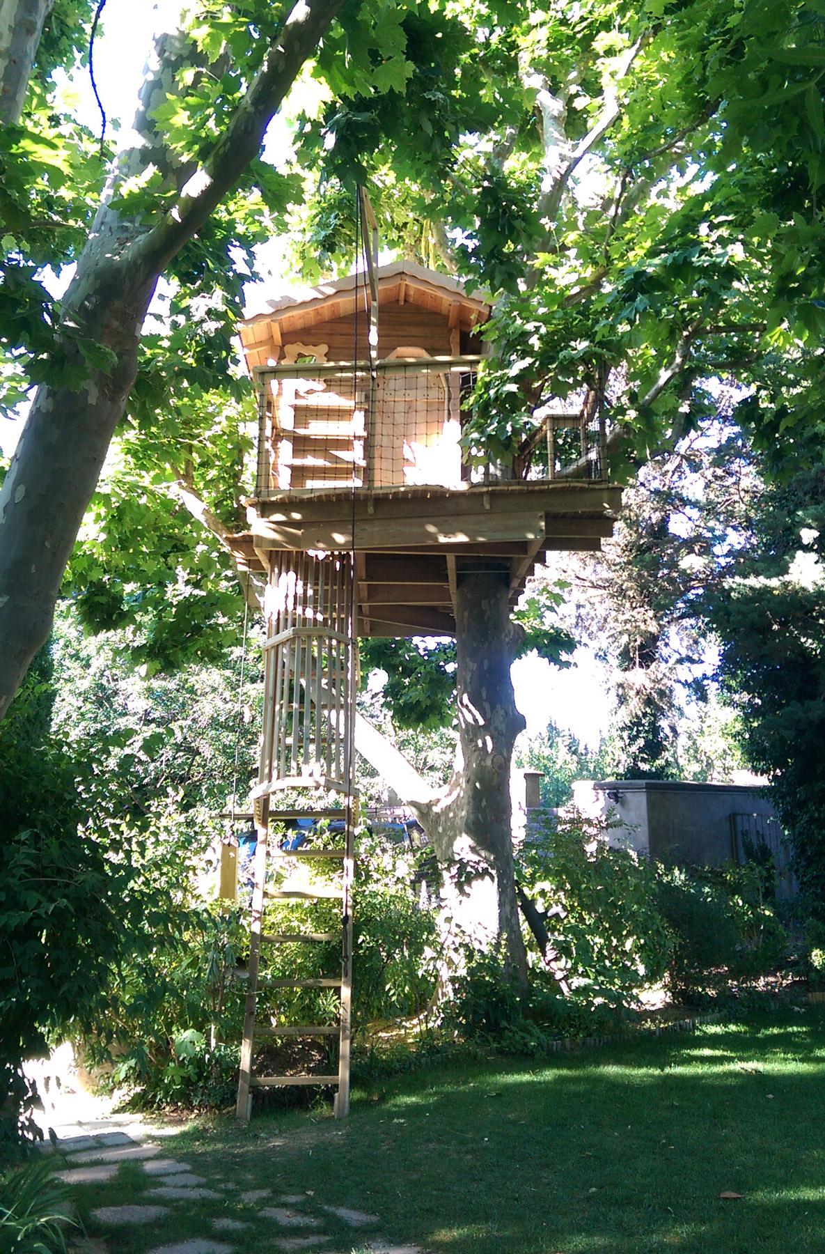 cabane dans un platane – arbre habitat